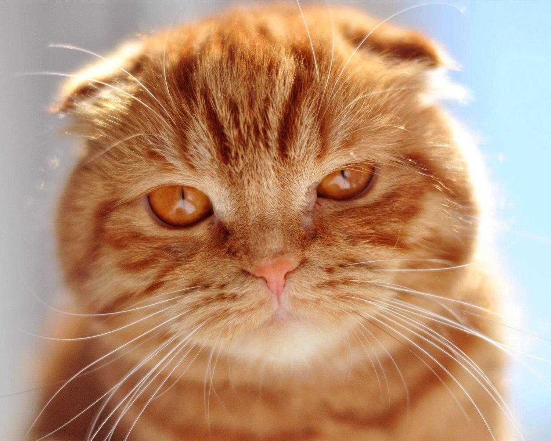 Вероятные причины, почему кошка худая, и действия хозяина по решению проблемы