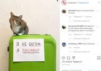 Правила перевозки кошек в 2021 году