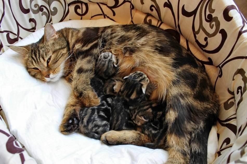 Если кошка съела котенка, фото, причины, как предотвратить гибель котят