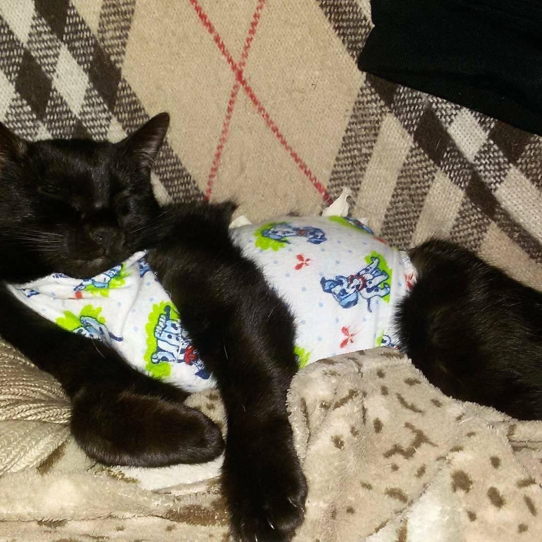 Кошка после стерилизации: послеоперационный период, адаптация и уход за животным