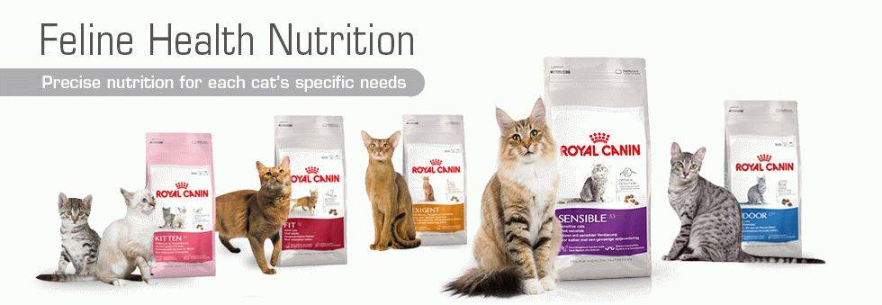 Обзор корма для кошек роял канин (royal canin): виды, состав, отзывы