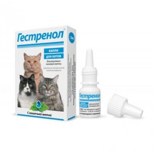 Противозачаточные таблетки для кошек