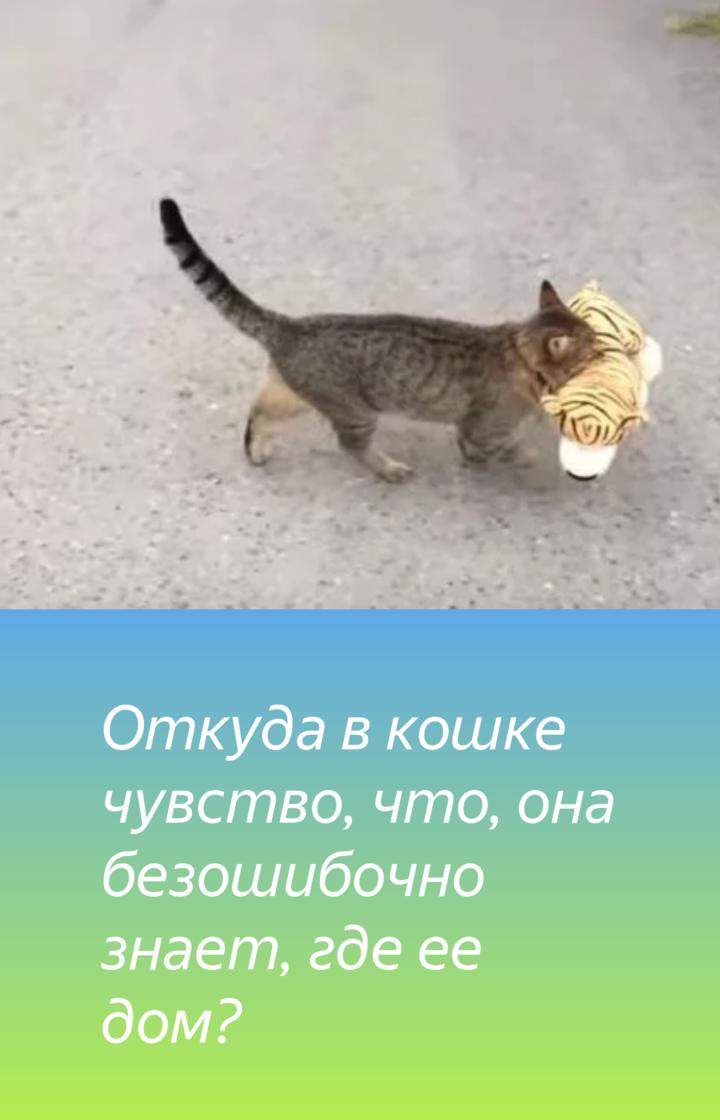 Кошки находят дорогу домой: способы, причины, особенности
