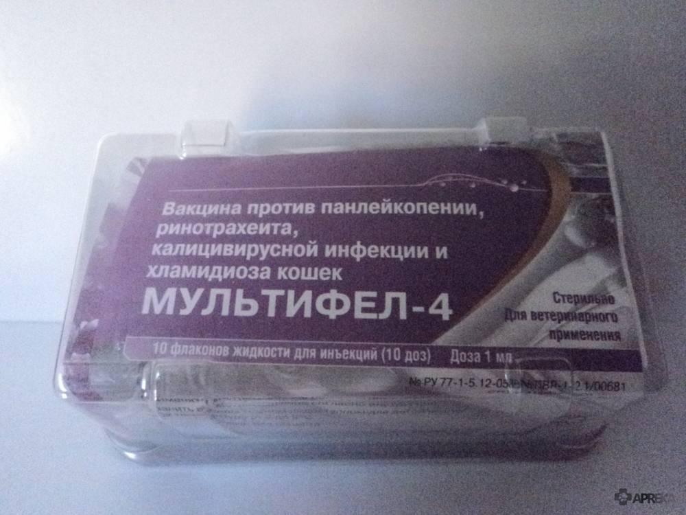 """Вакцина """"мультифел-4"""" для кошек: инструкция по применению, отзывы о прививке"""