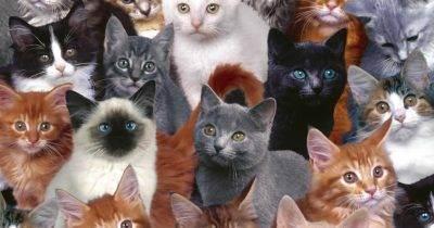 Можно ли заводить кошку при аллергии