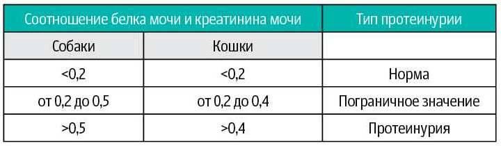 Белок в моче у кошек причины и лечение - oozoo.ru
