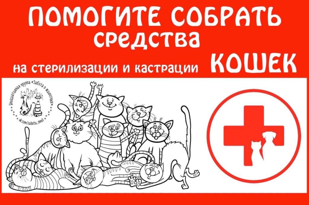 Кастрация котов и стерилизация кошек: плюсы и минусы
