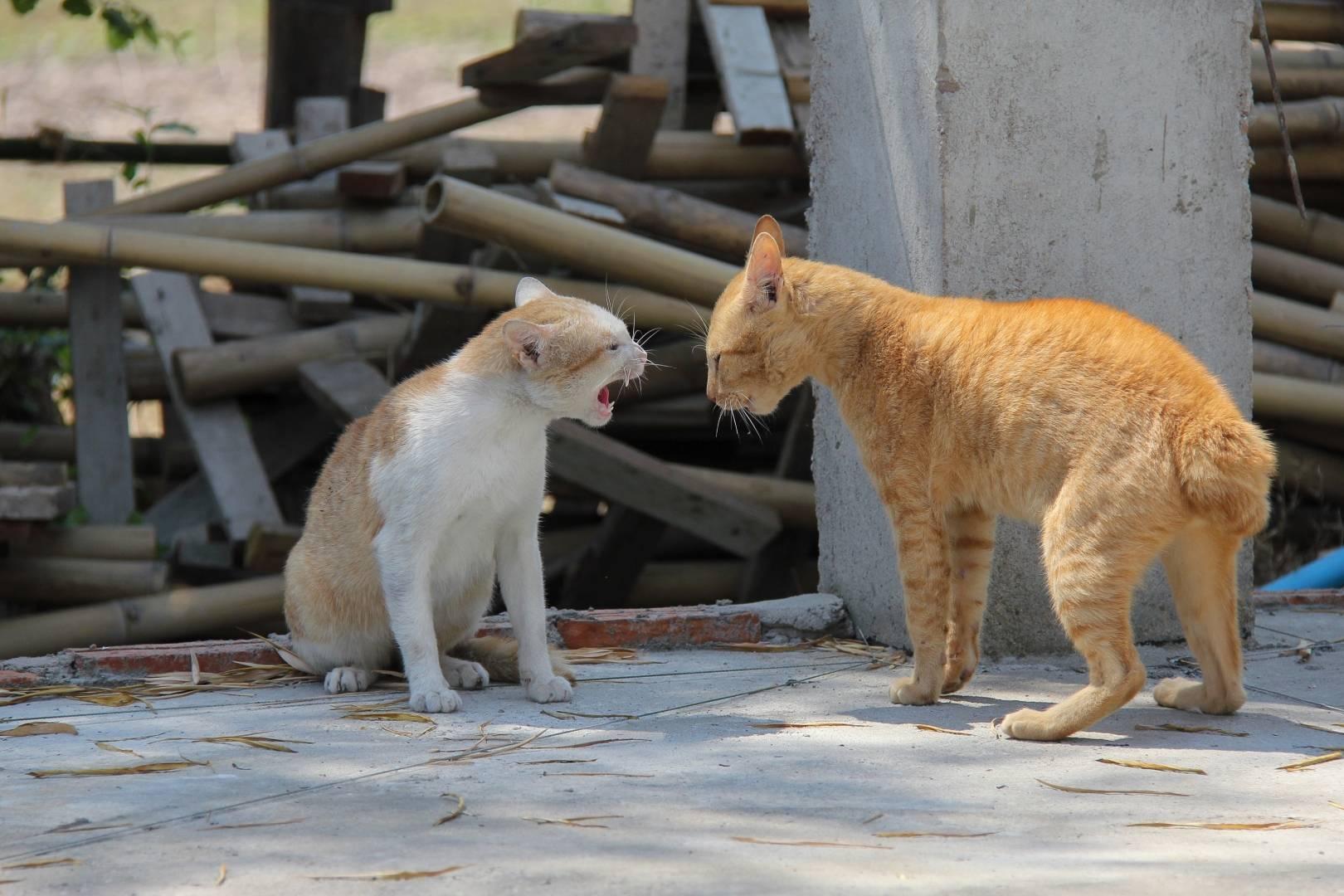 Почему кошка кусает котят?