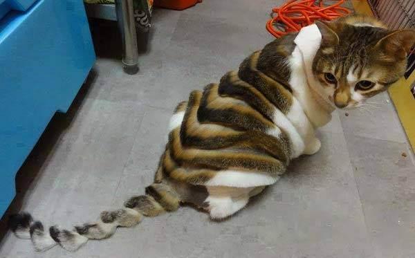 Как понять, почему кошка чешет попу об ковер?