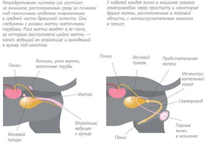 Как прощупать мочевой пузырь у кота - oozoo.ru