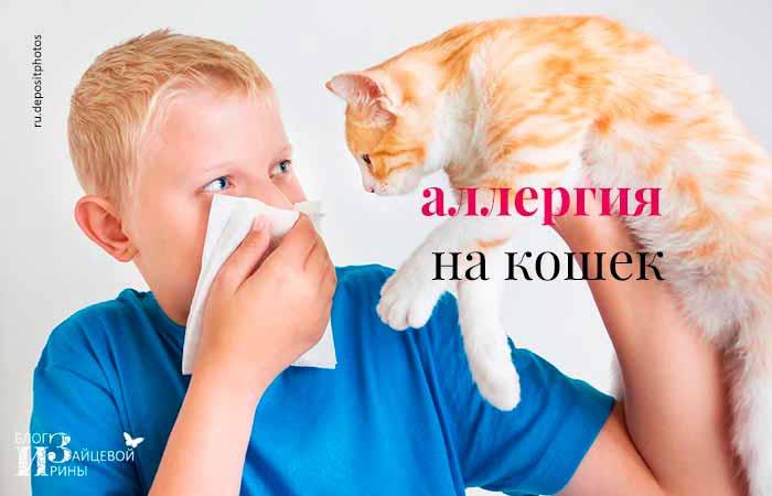 Аллергия у кошек: симптомы и лечение