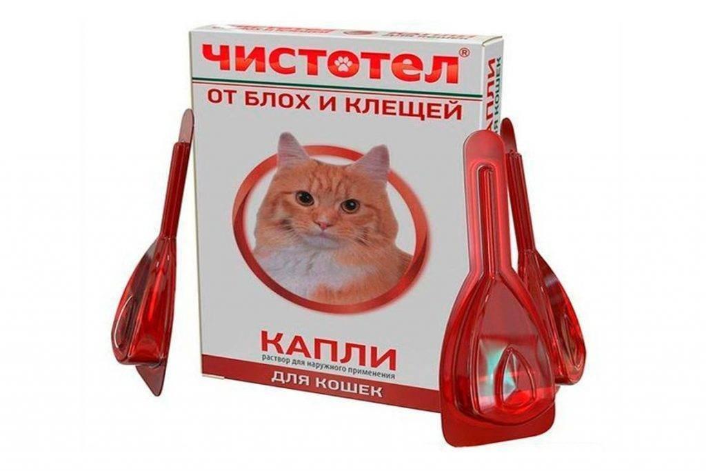 Лекарства от блох для кошек: виды, особенности