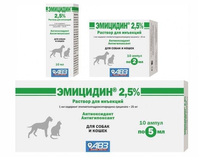 Инструкция по применению гентамицина в ветеринарии. рассчитайте оптимальную дозу препарата. изучите широту антибактериального эффекта гентамицина для кошек. улучшите эффективность терапии на 400%