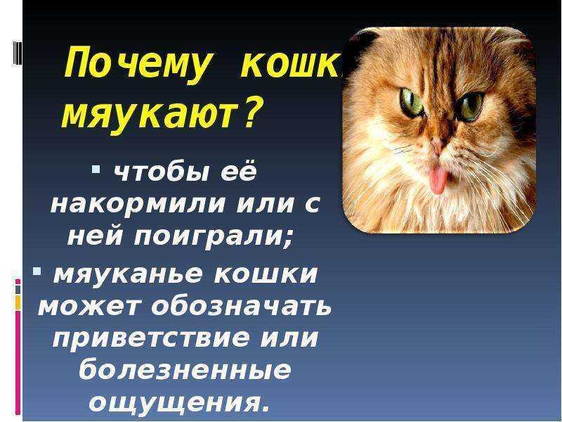 Почему у кошки пропал голос и она беззвучно мяукает