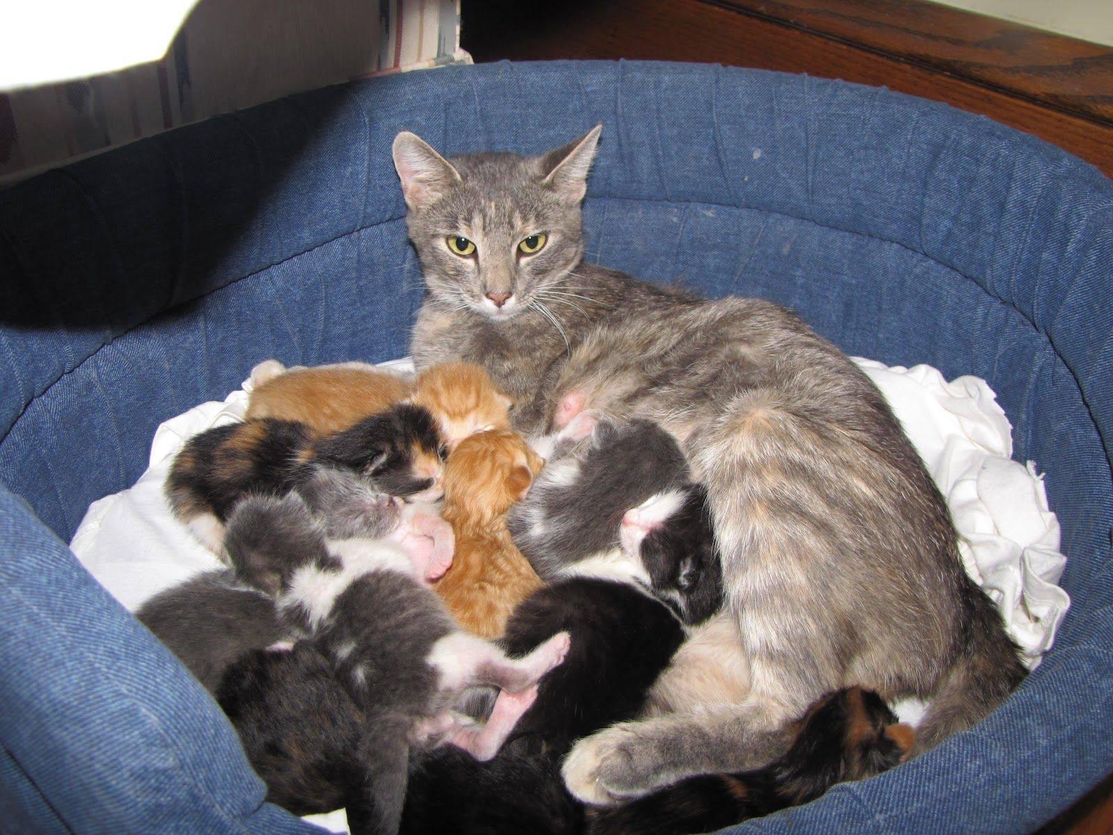 В каком возрасте брать котенка: уход за животными разного возраста