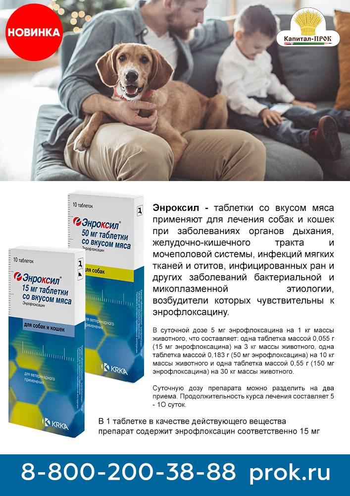 Энрофлоксацин: инструкция по применению в ветеринарии