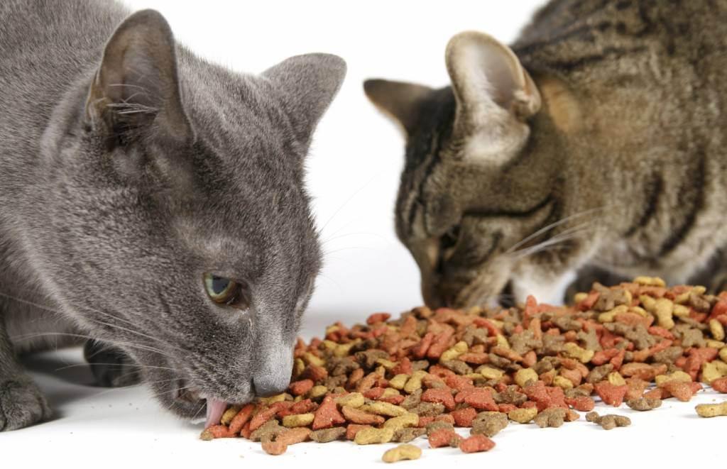 Как приучить котенка к сухому корму: с какого возраста, после влажного или натурального рациона