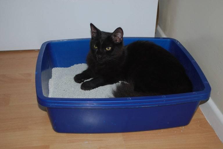 Когда котята начинают ходить: этапы развития. когда котята начинают ходить самостоятельно