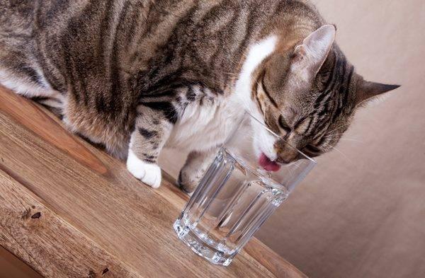 Кот икает что делать