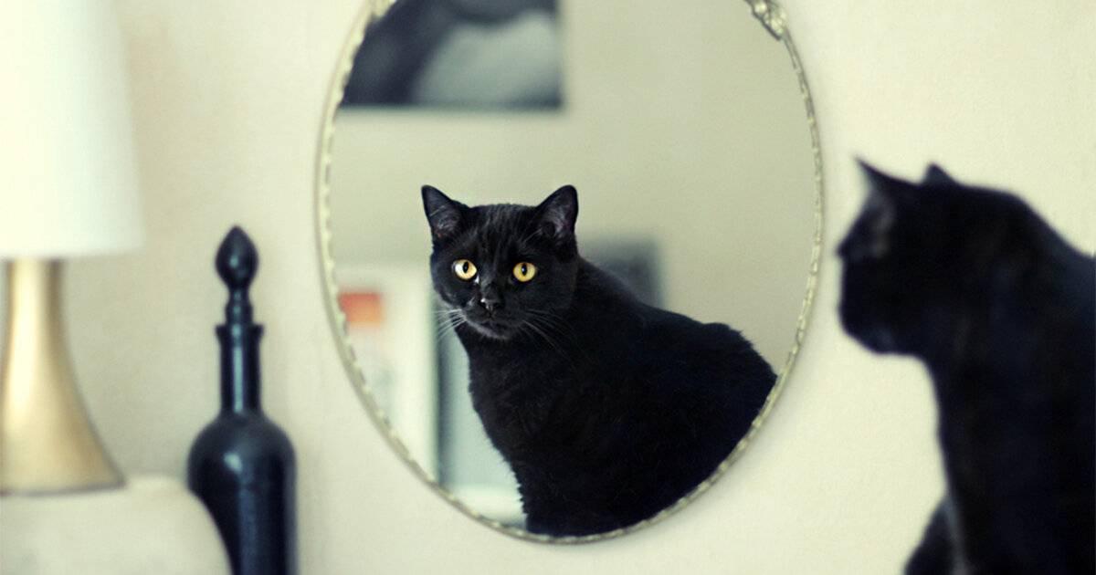 Почему котам нельзя смотреть в зеркало - oozoo.ru