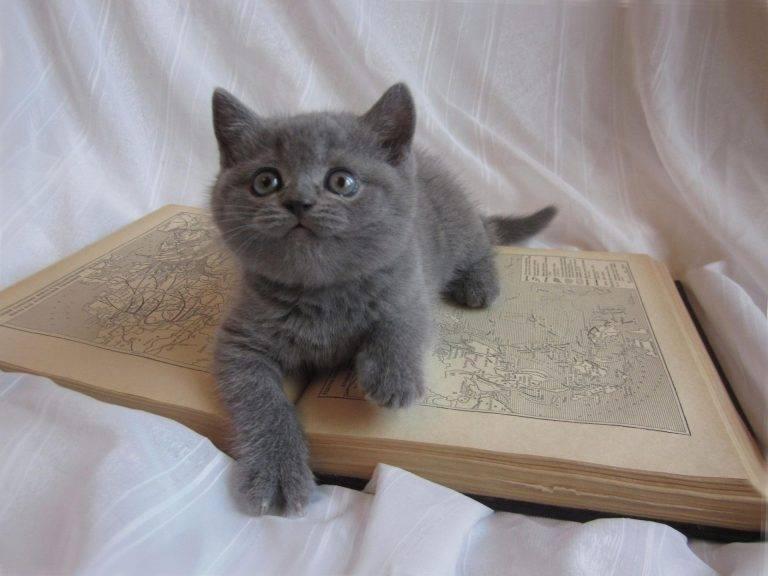 Чем кормить котенка в 3 месяца?