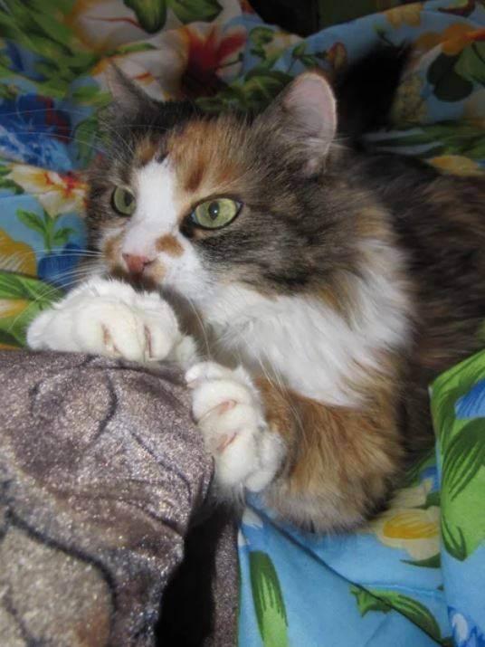 Кастрированный кот и секас - запись пользователя ljubanka (ljubanka) в сообществе домашние животные в категории помогите советом - babyblog.ru