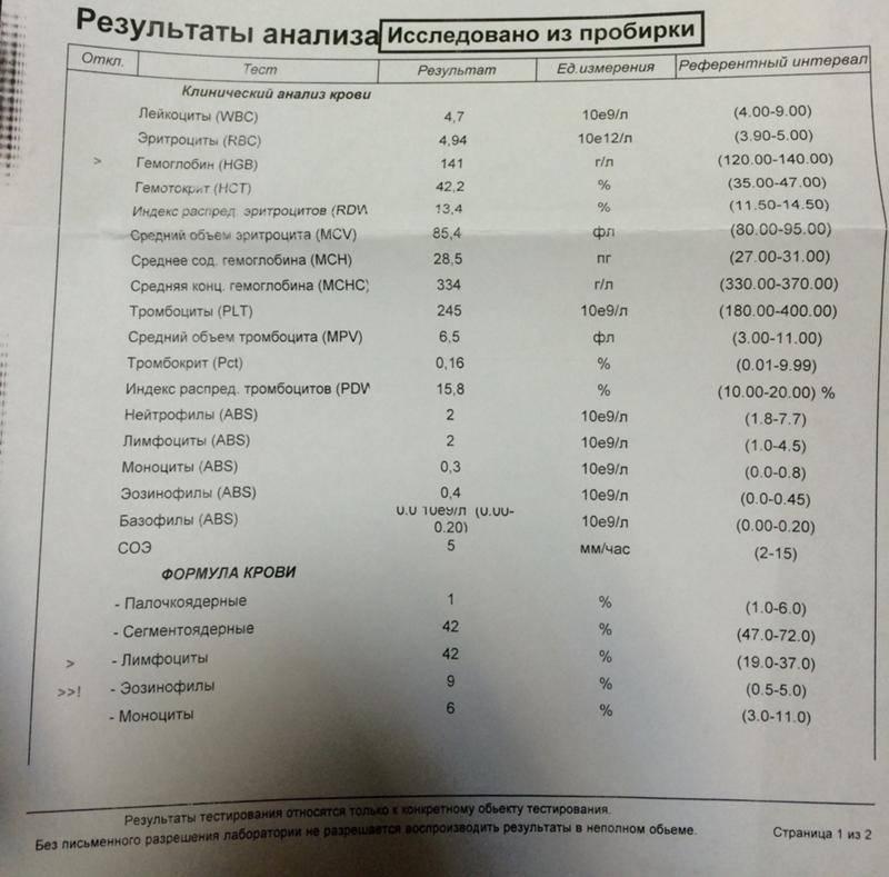 Эозинофильная гранулёма у кошек: что это, симптомы, профилактика и лечение