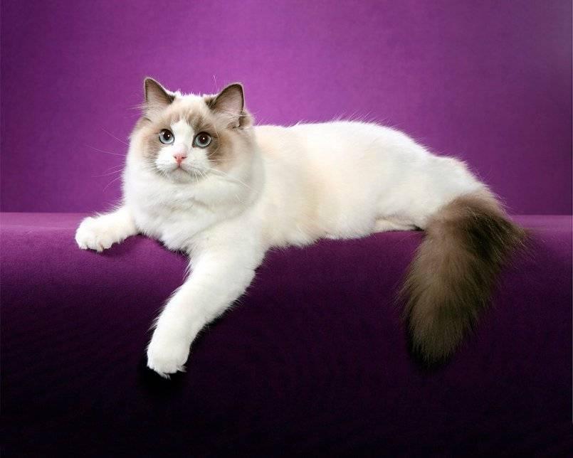 30 самых милых и ласковых пород кошек