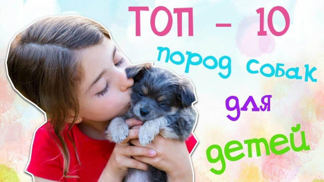 Заводить ли собаку - запись пользователя мария (maiii) в сообществе домашние животные в категории дети и животные - babyblog.ru