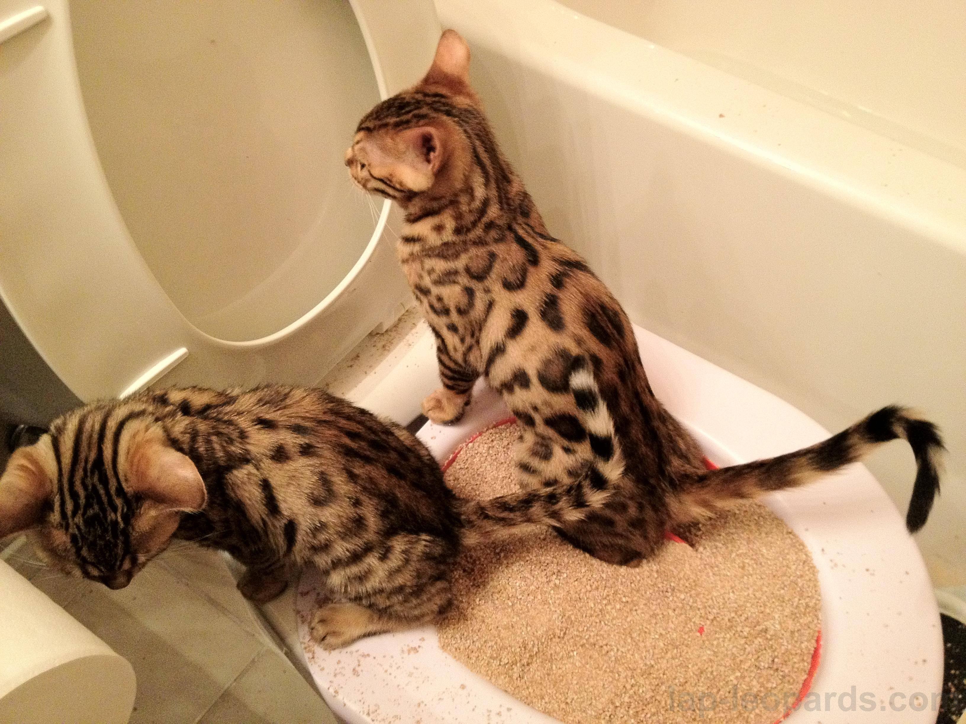 Как приучить кошку к домику: простые и эффективные способы