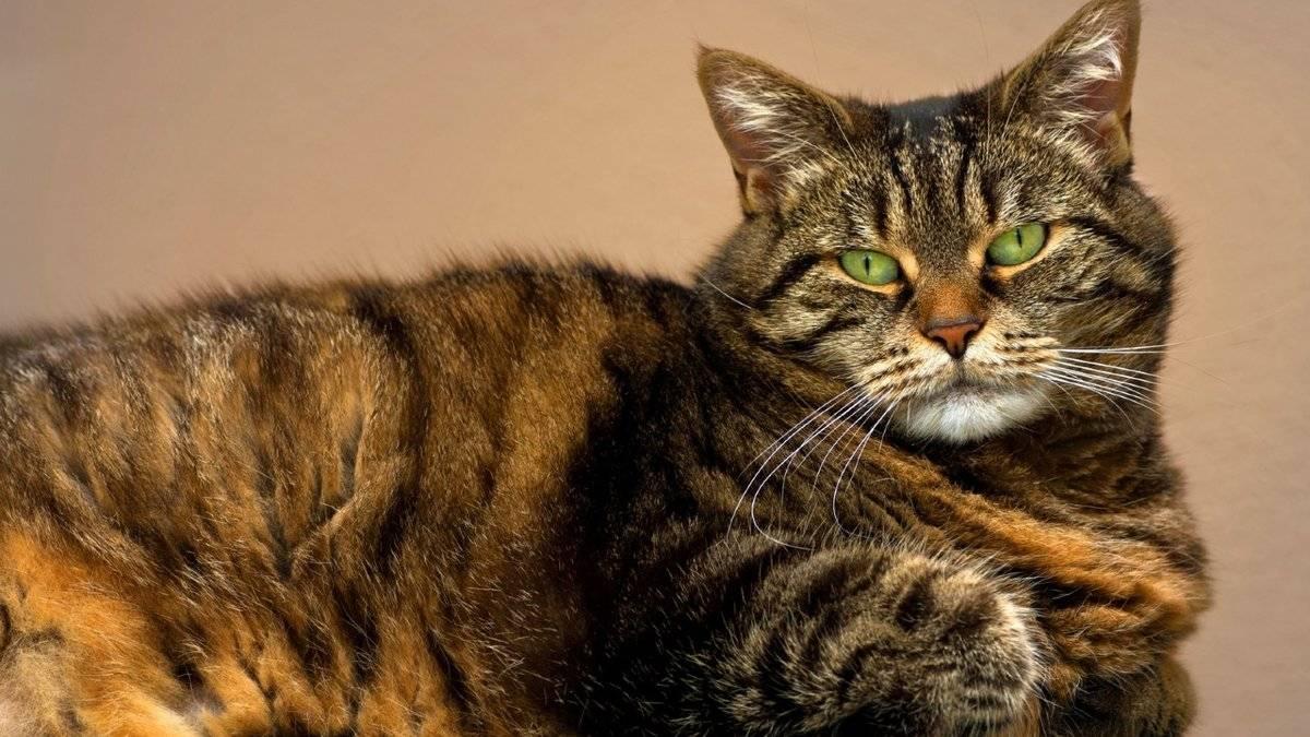 Болезни глаз у кошек: 11 заболеваний с фото и описанием симптомов