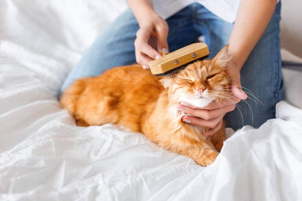 Почему животным нравится, когда их гладят? причины, фото и видео