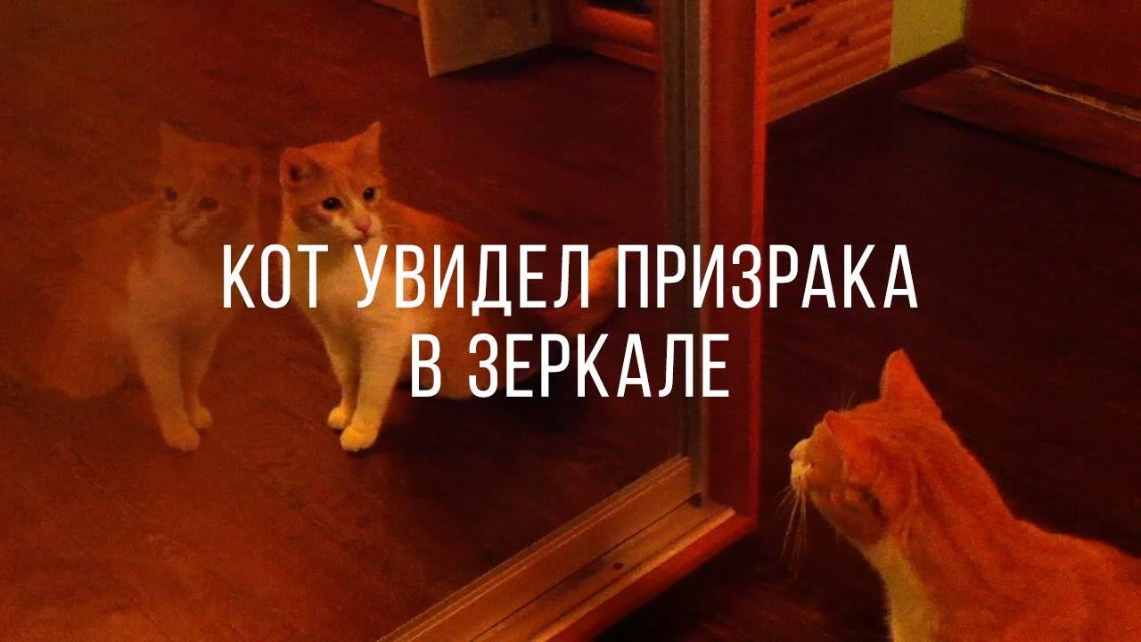 Как ведет кошка видит призраков. правда ли, что коты и кошки видят призраков