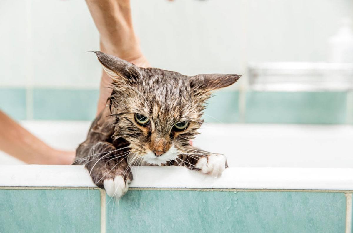 Как правильно купать кошку в домашних условиях которая боится воды