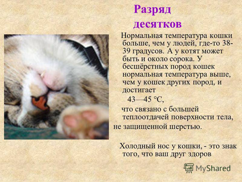 Основные признаки и примеры когда у кошки температура: определение без градусника