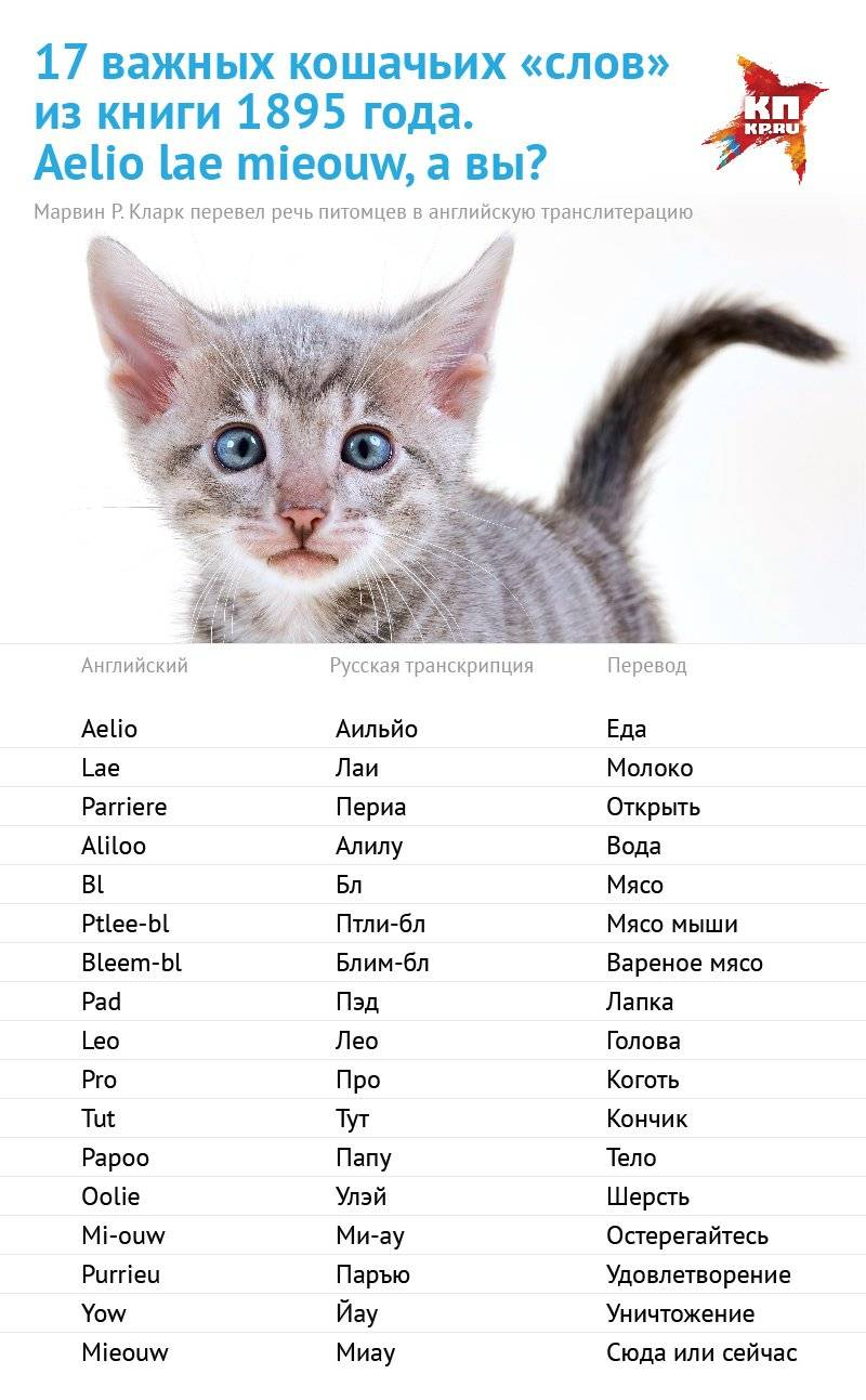 Как назвать рыжего кота: имена для мальчиков и девочек