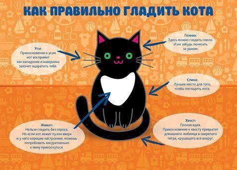 Как помочь кошке, которая не может помочиться?