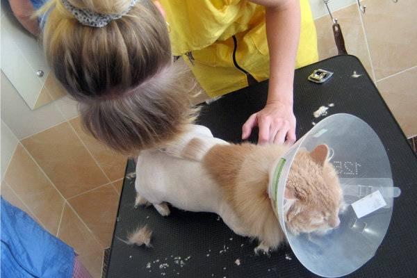 Колтуны у кошки. как легко убрать колтуны у кота в домашних условиях как срезать колтуны у кота