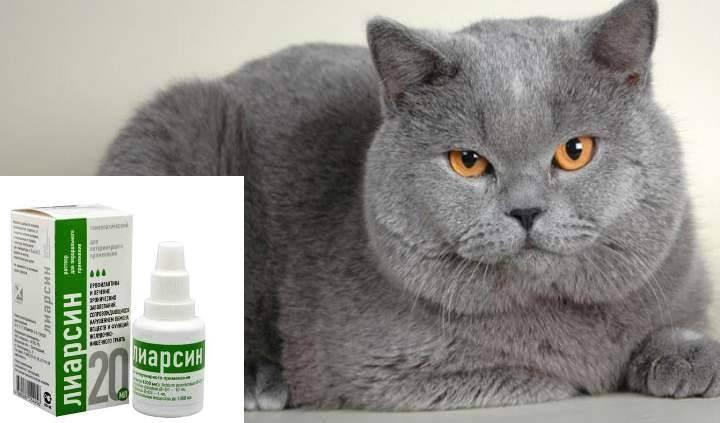 Первая помощь или что делать, если кошка отравилась