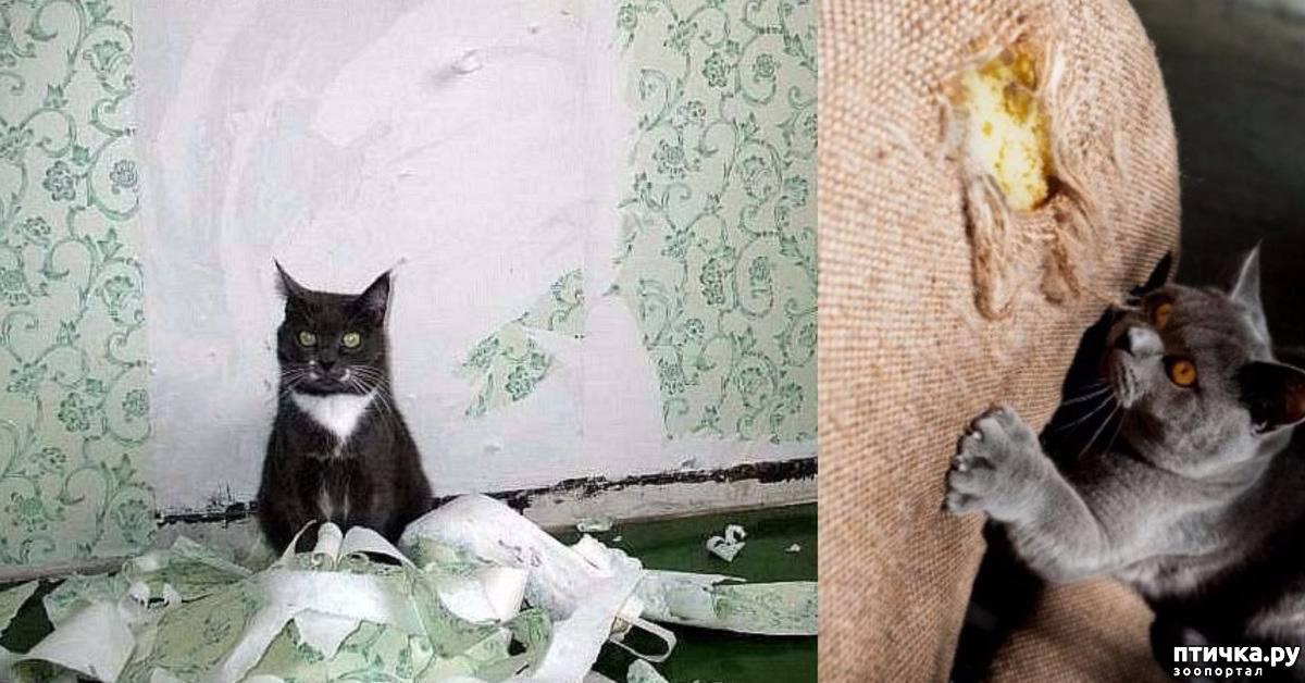 Как отучить кошку драть обои и мебель, что делать, если кот царапает обои, рвет их
