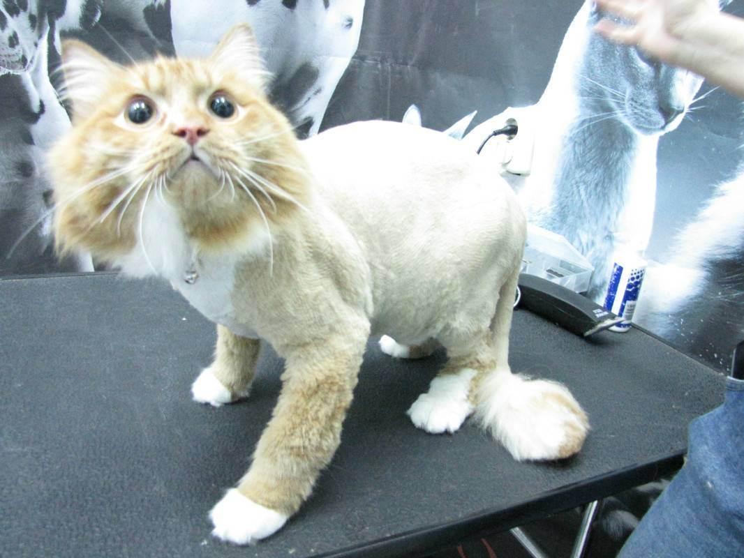 Как стрижка может повлиять на поведение кошки |