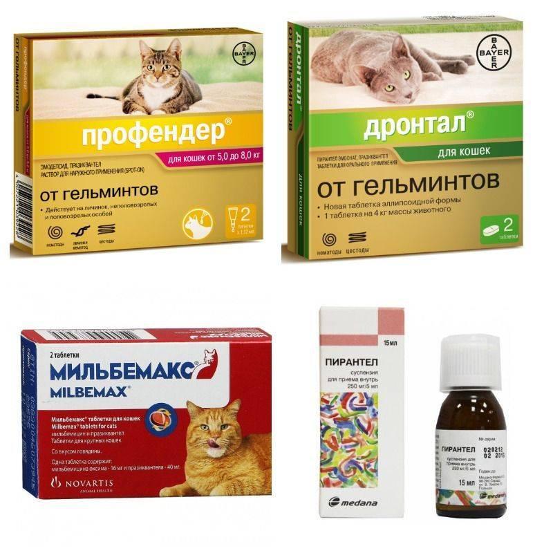 Чем и какими паразитами можно заразиться от кошки человеку