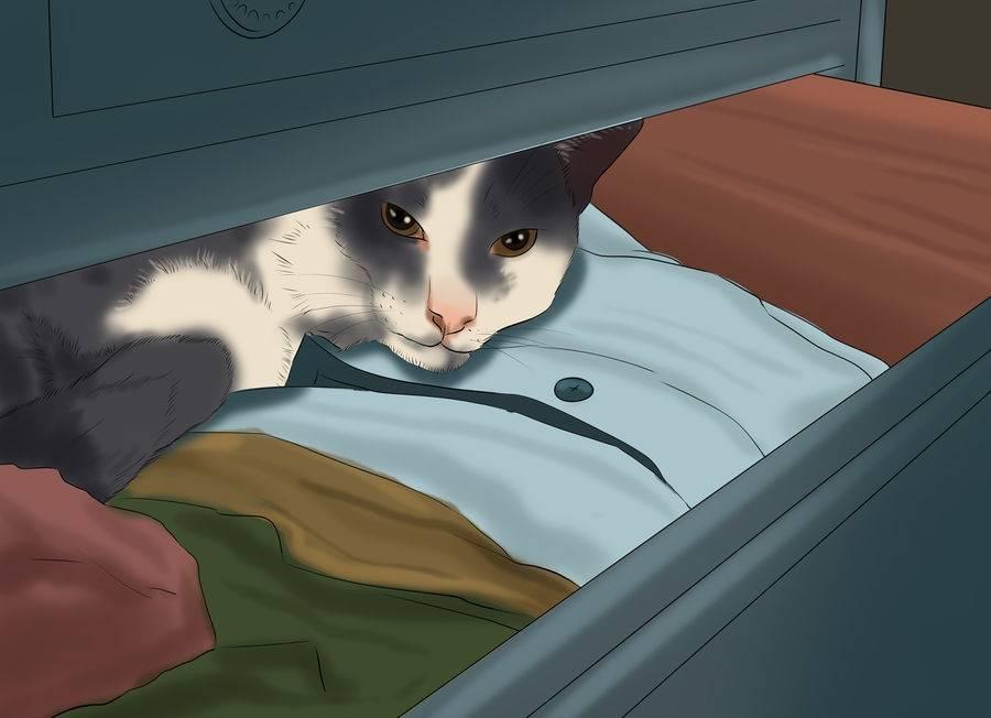 Что делать если потерялась кошка?