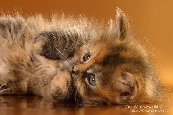 Подготовка к приезду котенка