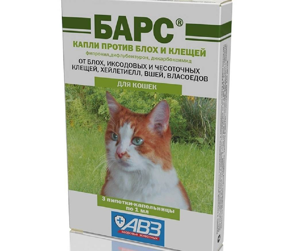 Обзор средств для кошек от блох и клещей