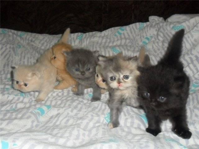 Когда котята открывают глаза после рождения, начинают есть самостоятельно, ходить, когда происходит смена зубов и другие аспекты развития
