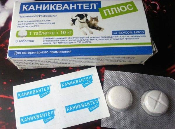 Дексаметазон в лечении отека легких у кошек