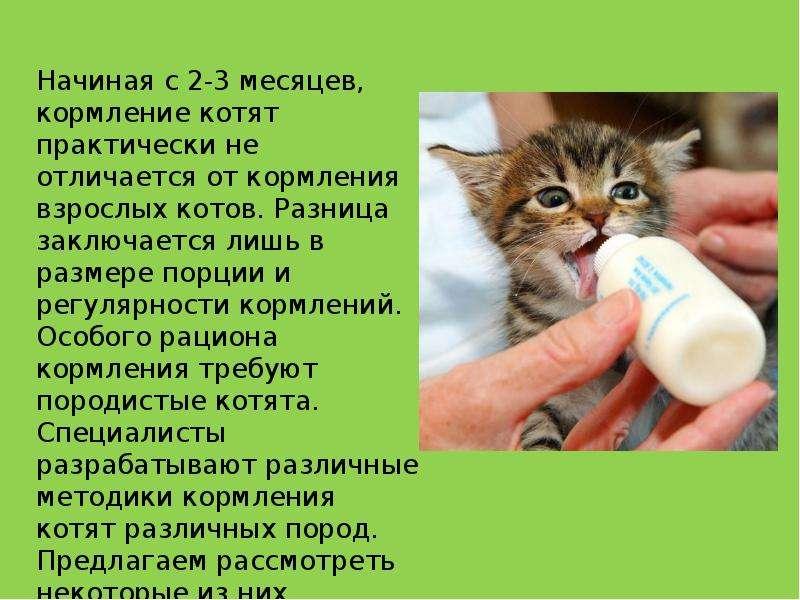 Каким кормом кормить кошку при диарее
