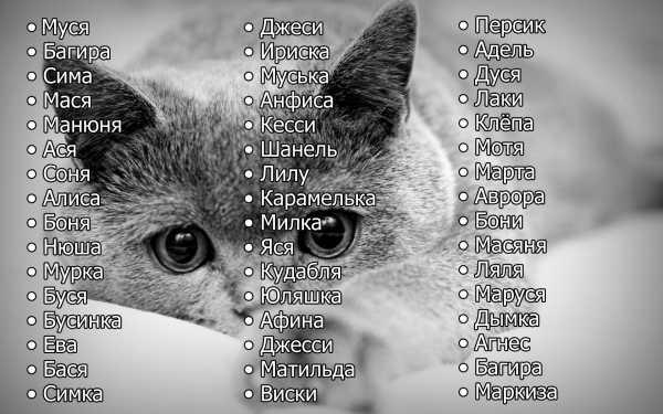 Русские клички для котов и кошек