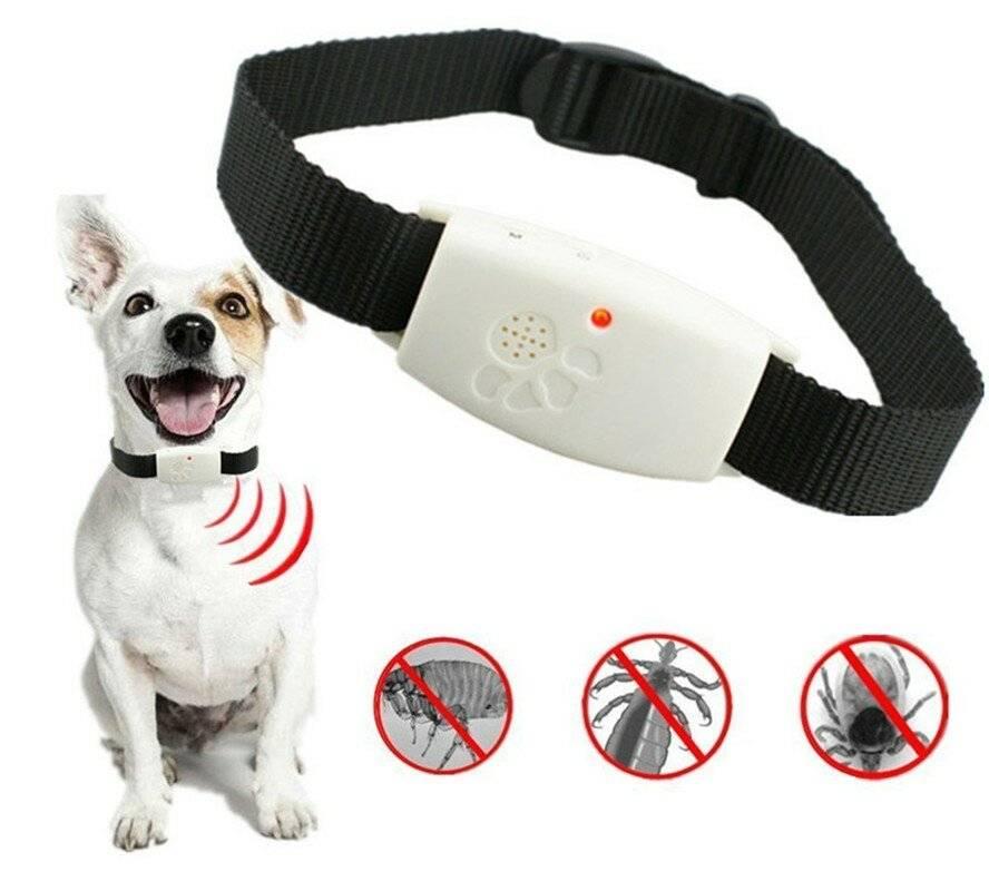 4 лучших способа защитить собаку от клещей